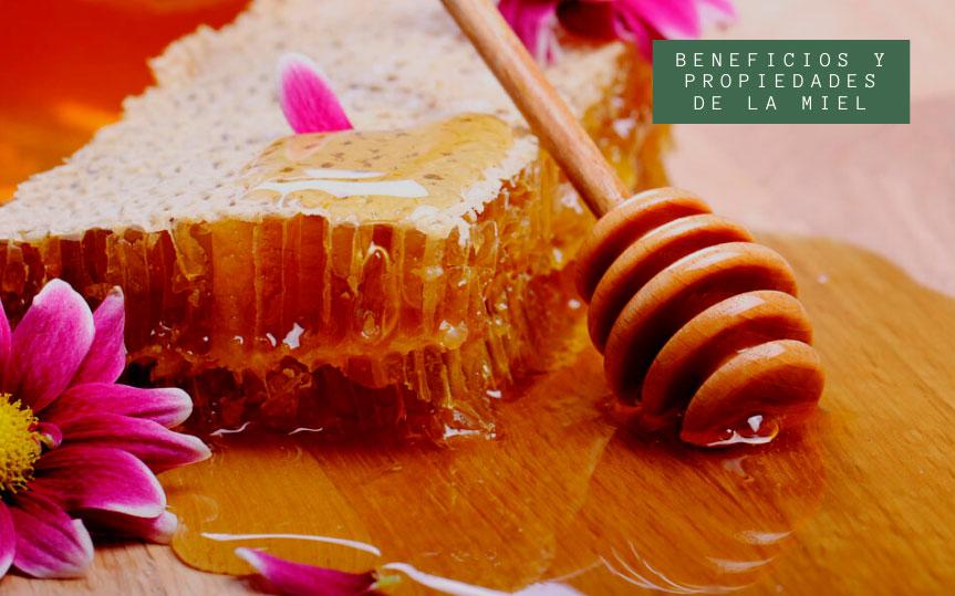 Descubre los beneficios de la miel, variedades y características